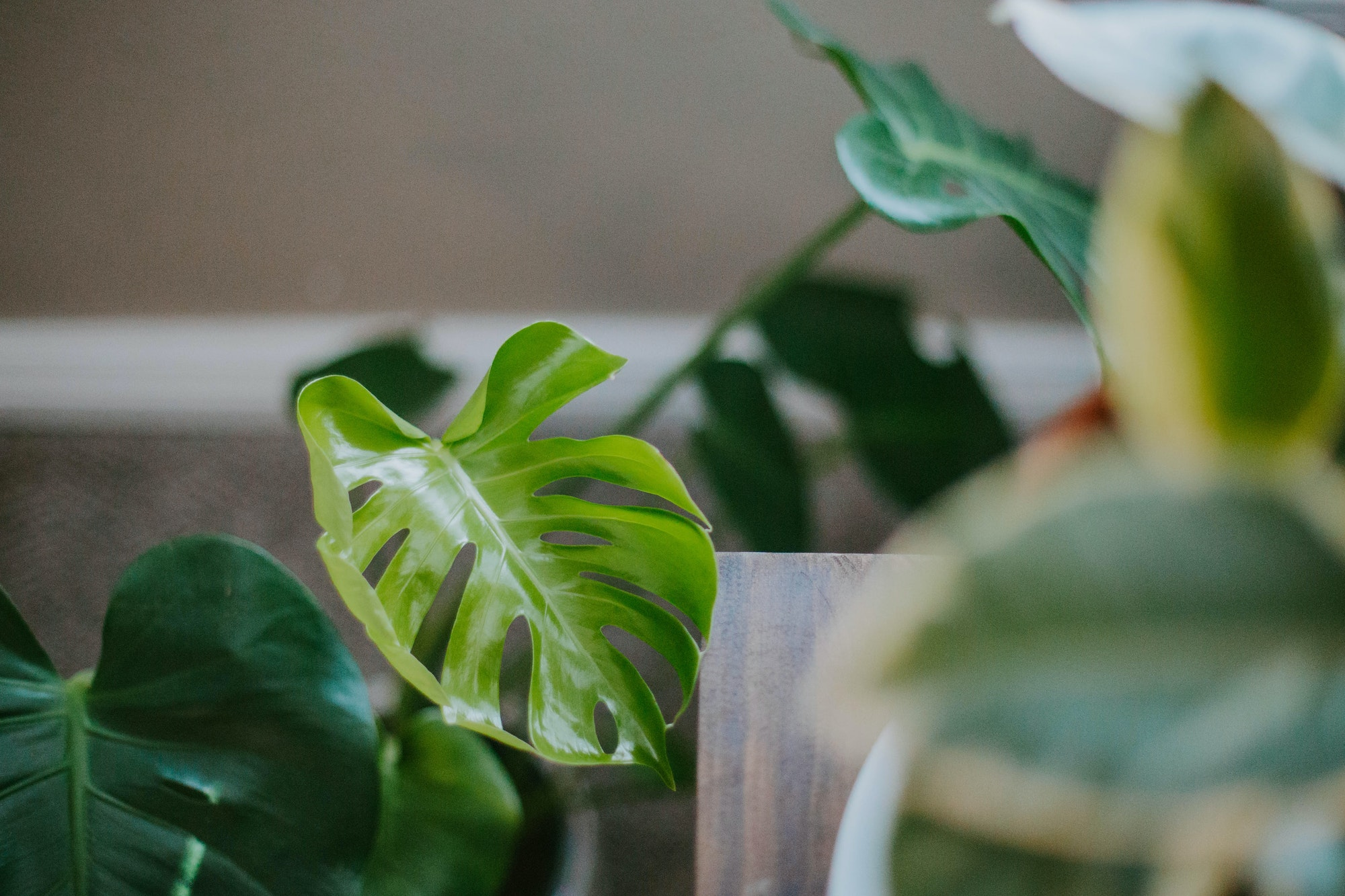 Indoor Growers World - Ornamental and House Plants