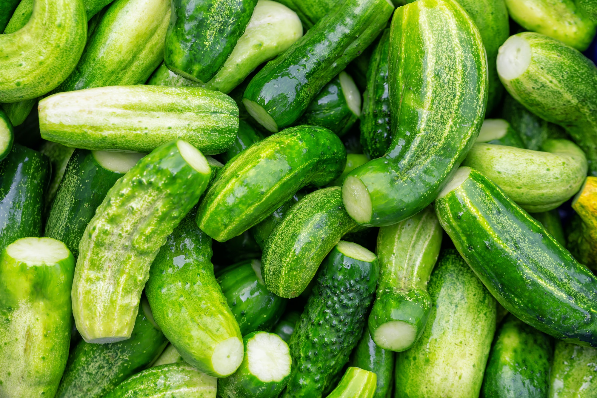 Indoor Growers World - Growing Cucumbers Indoors Takes Lots of Light
