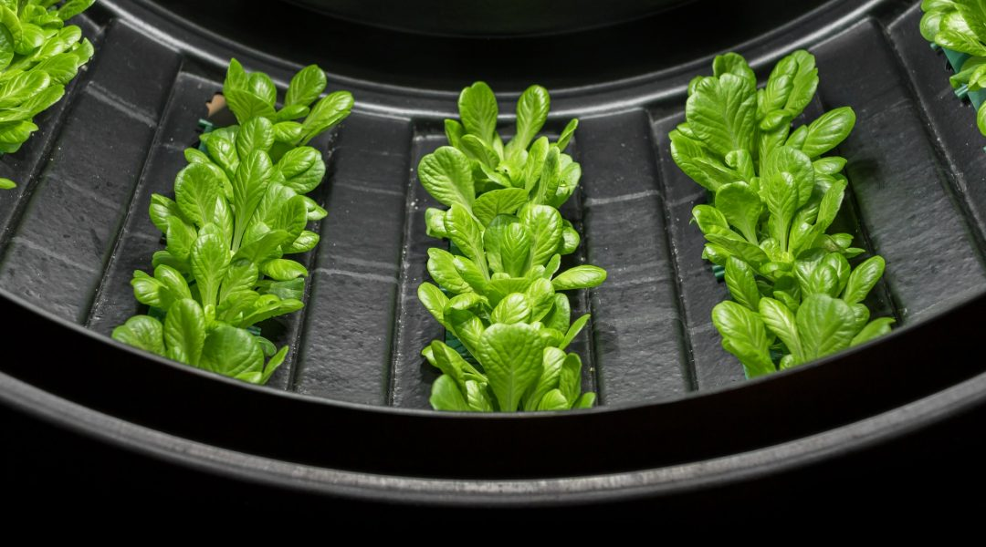 Indoor Growers World - Lettuce grown in a Controlled Environment Vertical Farm