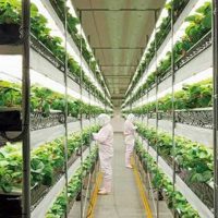 Indoor Growers World - Welcome to the Future of Agriculture